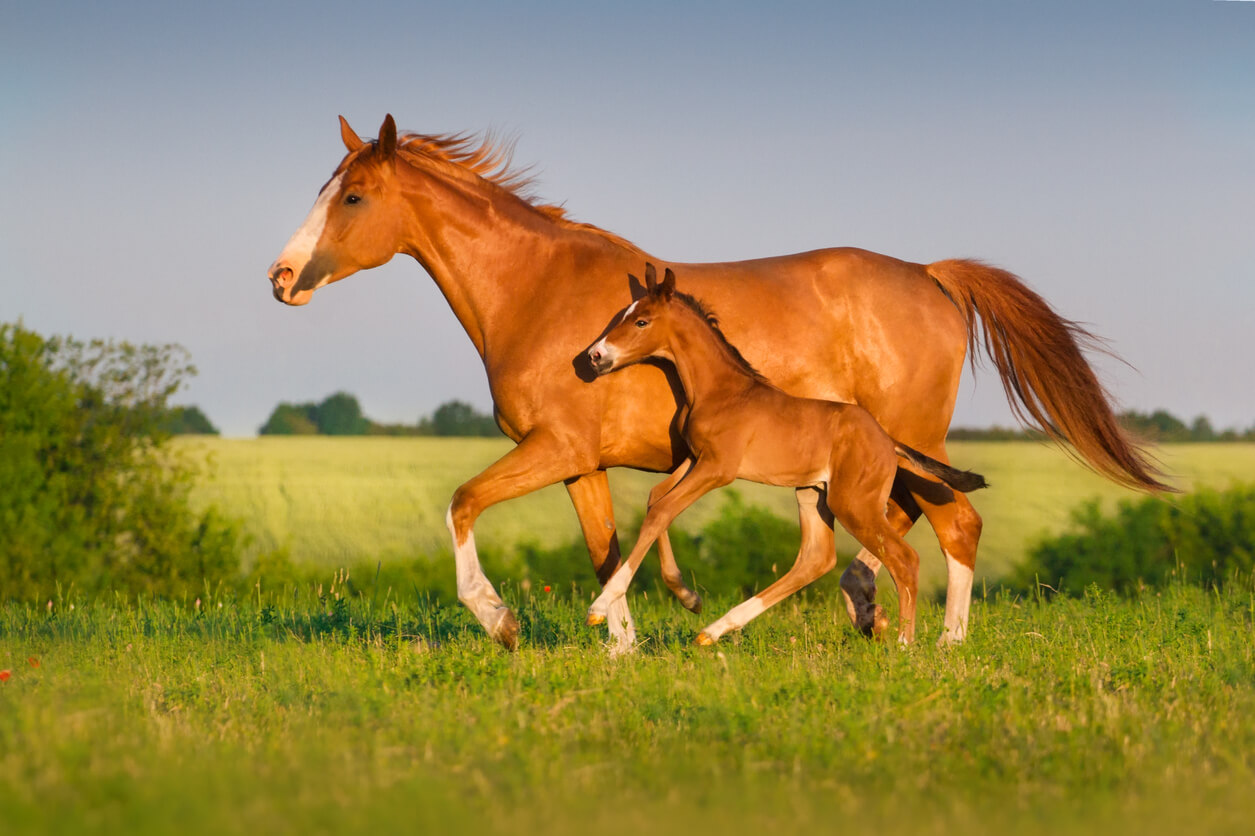 6 - Mare and Foal